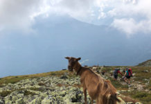 Zams nach Wenns; Alpenüberquerung E5