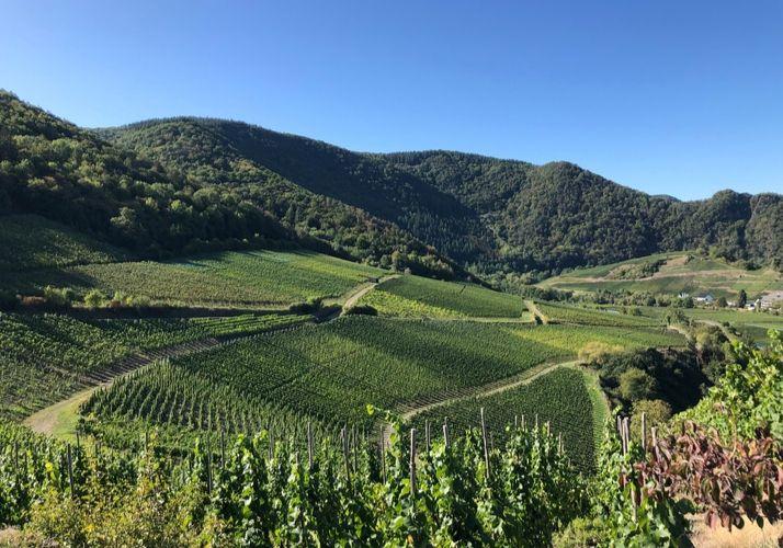 Ausblick auf die Weinberge von der Saffenburg