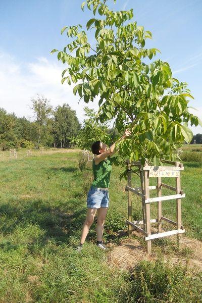 Baumpatenschaft Hof Windkind