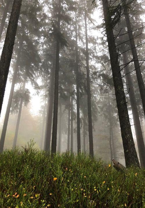 Nebel im Naturpark Hunsrück Hochwald