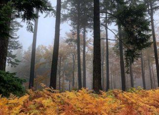 Wandern im Nationalpark Hunsrück Hochwald