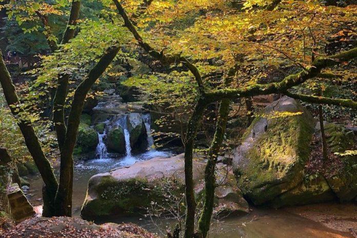 Mullerthal Trail Wandern