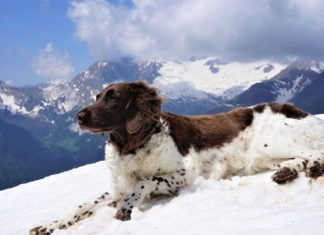 weitwandern mit hund tipps
