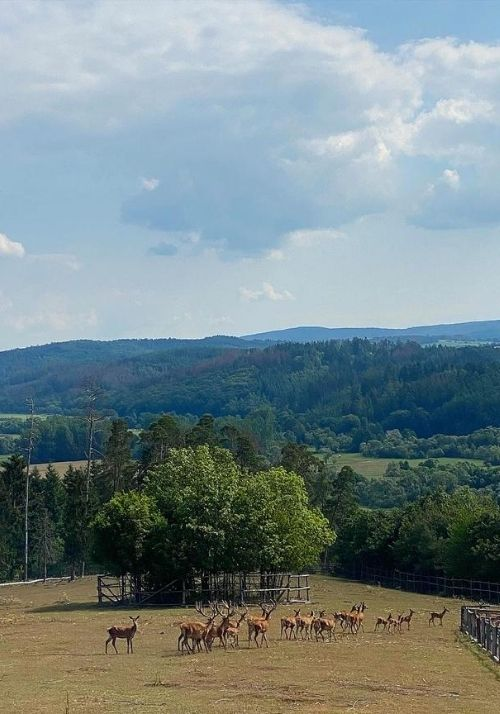 Rothwild Wildpark Frankenberg