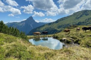 Kat-Walk Kitzbüheler Alpen