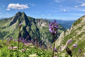 Oberallgäu Bergparadiese