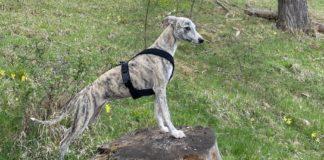 Wandern mit Hund ohne Leine